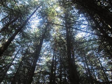 magical forrest, Co. Wexford Ireland